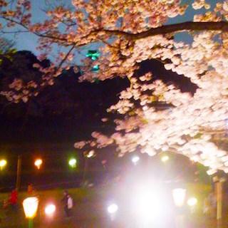 岡山城 夜桜 DSC_1915