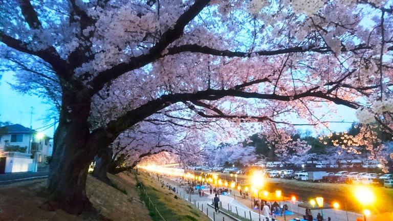 岡山城 と 夜桜へDSC_0397