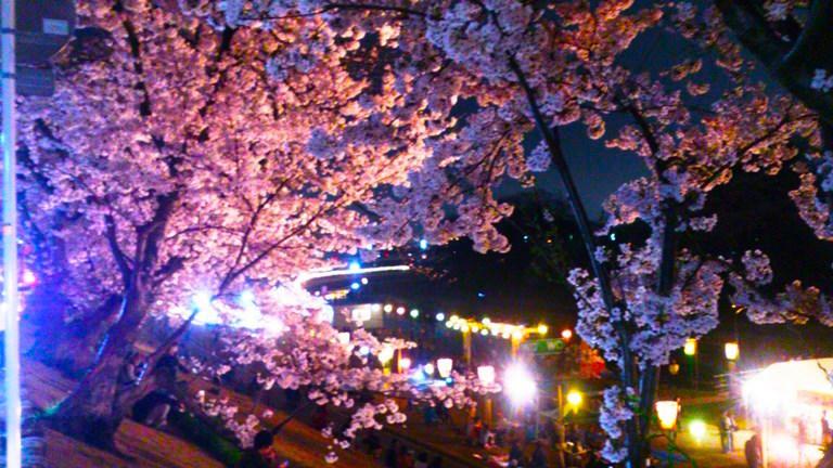 おかやまさくらカーニバル 夜桜DSC_1794