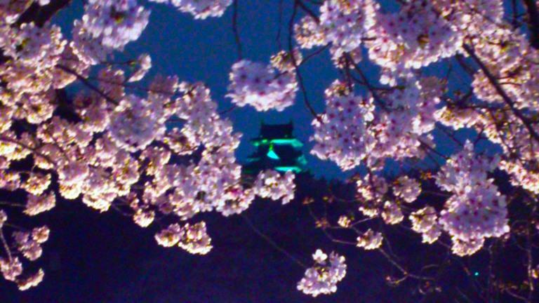 岡山城 と 夜桜DSC_1842 - コピー のコピー