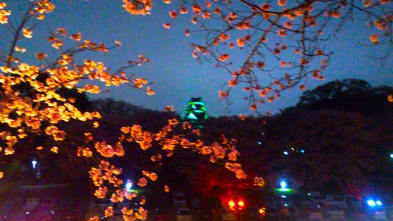 岡山城 と夜桜DSC_1743