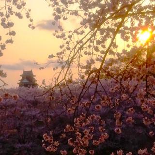 岡山城 桜 夕日 ベストDSC_0424