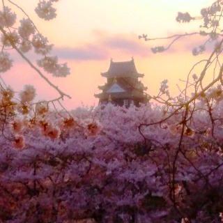 岡山城 桜 夕暮れDSC_0426