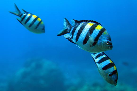 沖縄の魚3