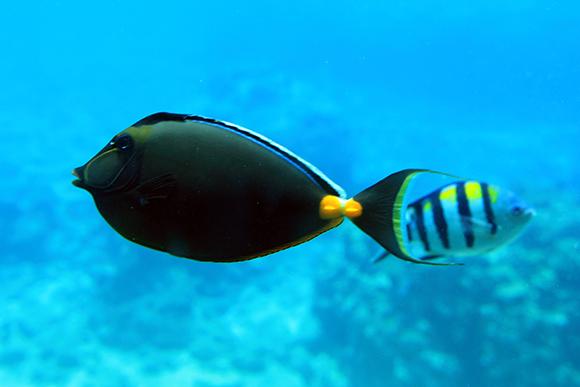 沖縄の魚1