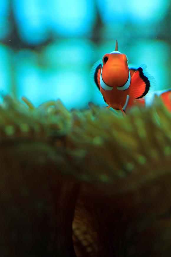 沖縄の魚4