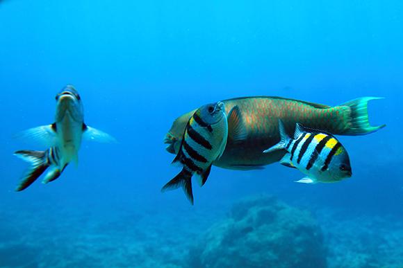 沖縄の魚2