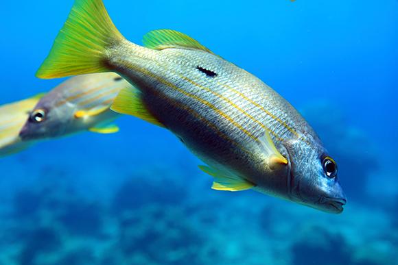 沖縄の魚5
