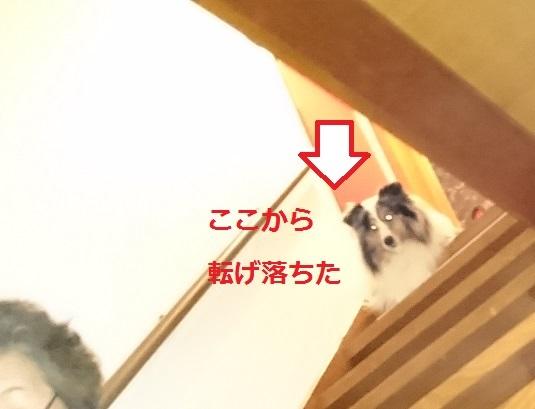 DSC_1254_2017031700571772d.jpg