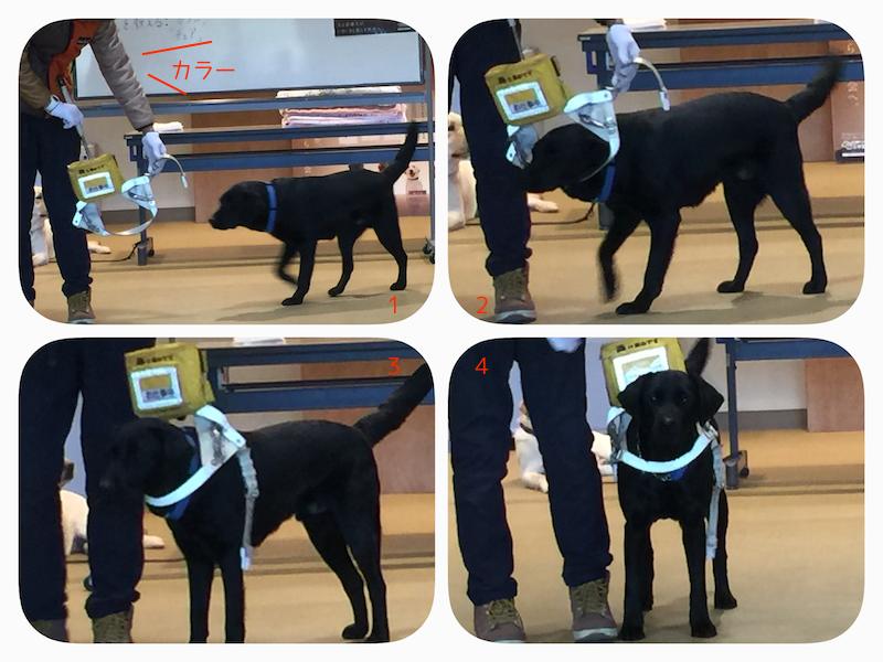 訓練犬がカラーの見本を見せてくれています