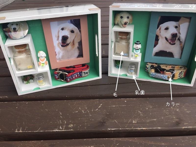 ヴェガとライリーの写真と乳歯と毛とカラーを1つのボックスにまとめてみました
