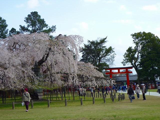 17,4,12 上賀茂神社 (3)