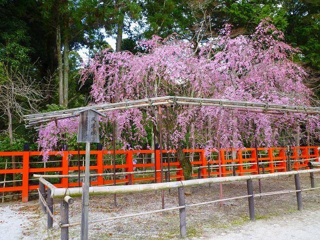 17,4,12 上賀茂神社 (4)