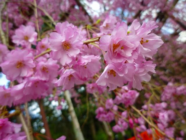 17,4,12 上賀茂神社 (5)