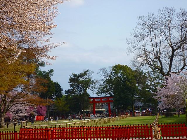 17,4,12 上賀茂神社 (8)