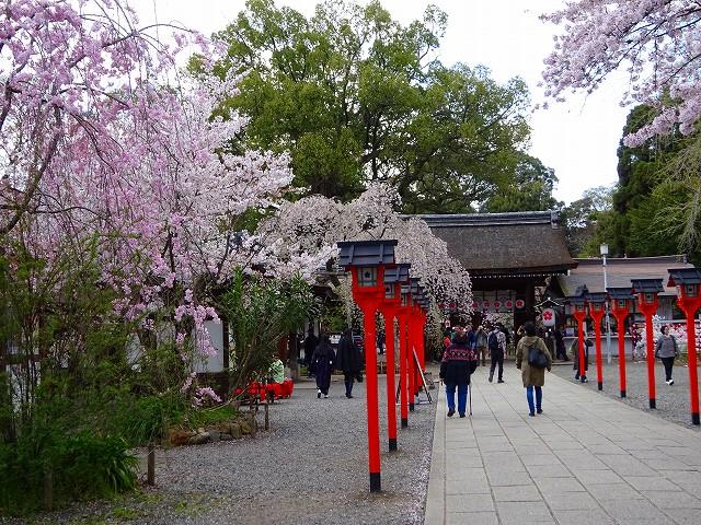 17,4,13 平野神社 (2)