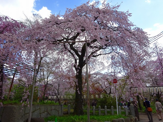 17,4,13 平野神社