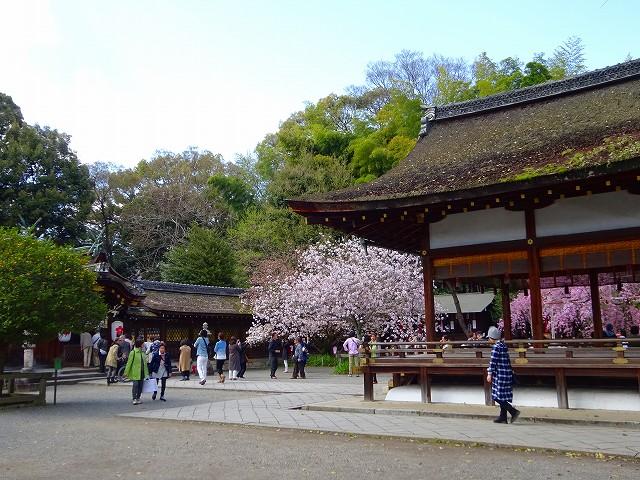 17,4,13 平野神社 (6)