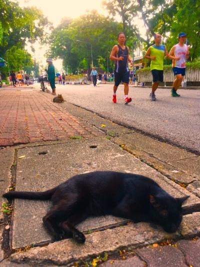 ランナーと黒猫 タイのヲソト猫
