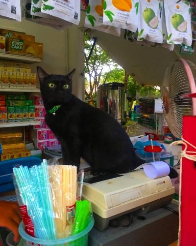 タイのヲソト猫175 招き猫