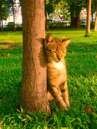 タイのヲソト猫178★すりすり猫