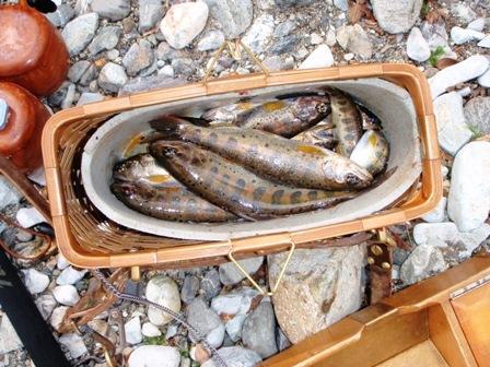 釣果の一部ブログ用
