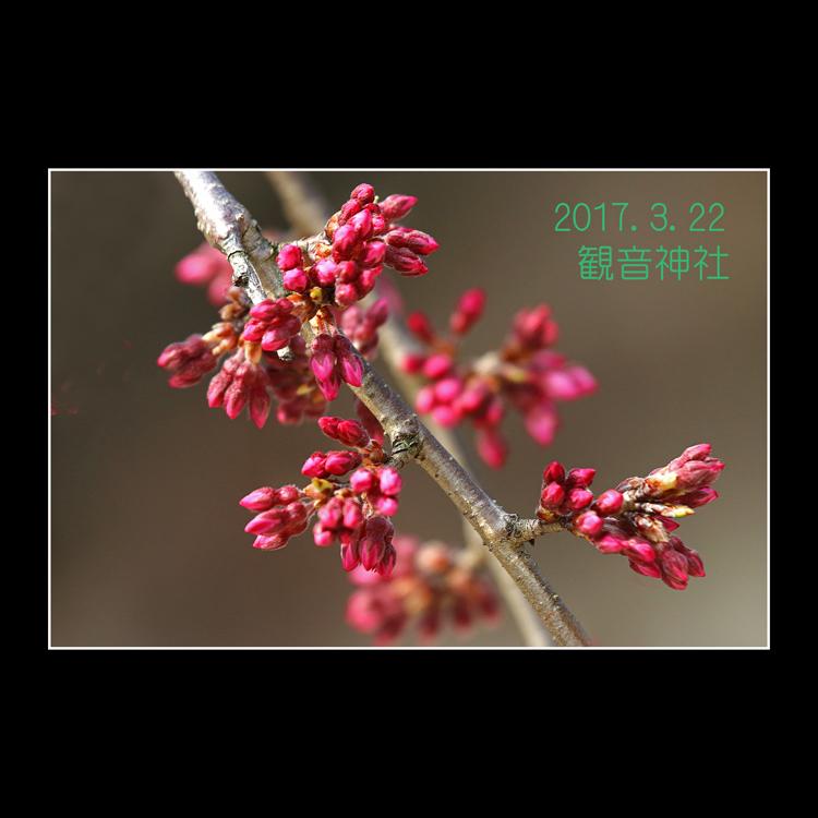 IMG_4489-1.jpg