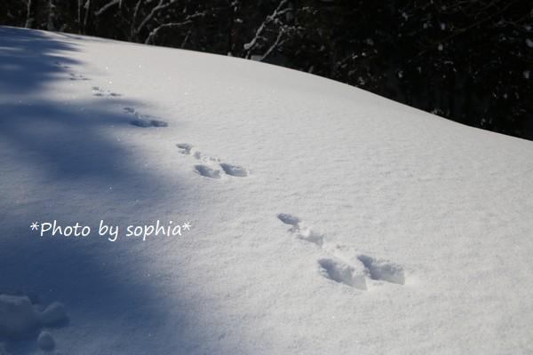 銀世界・ウサギ足跡