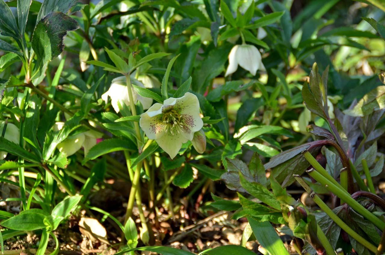 D70_7025庭の春
