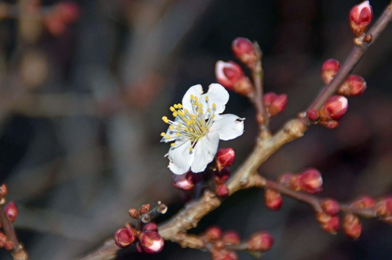 D70_7051庭の春