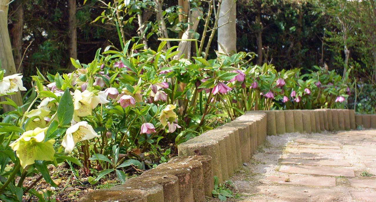 DSC_7434春の庭