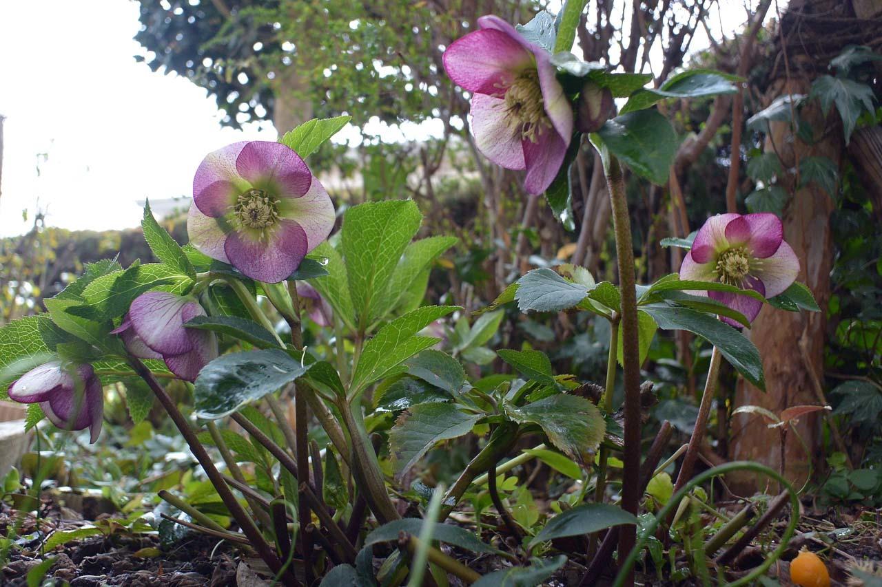 DSC_7443春の庭