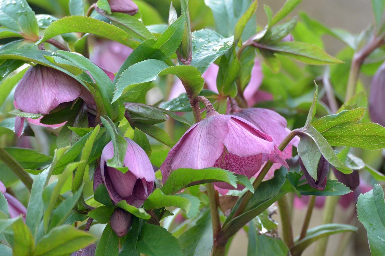 DSC_7507春の庭