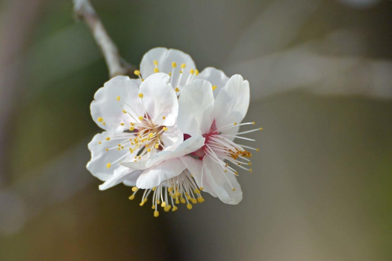 DSC_7466春の庭