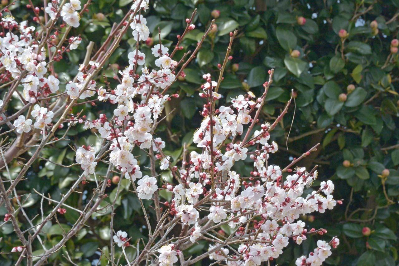 DSC_7531春の庭