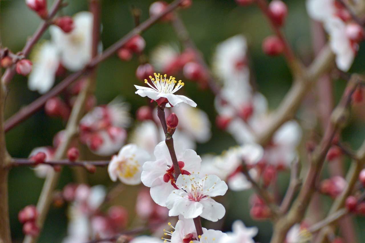 DSC_7541春の庭