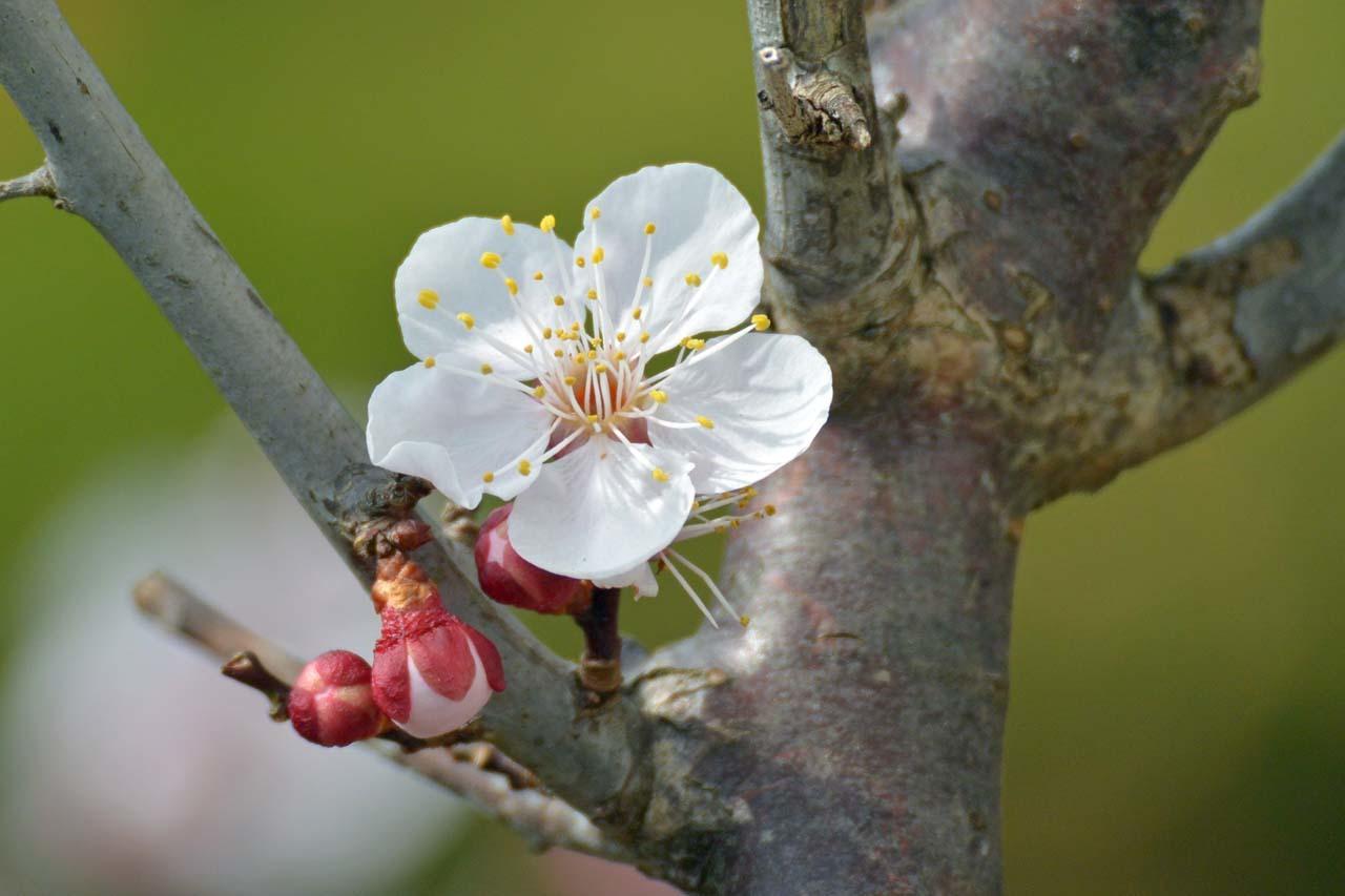 DSC_7468春の庭