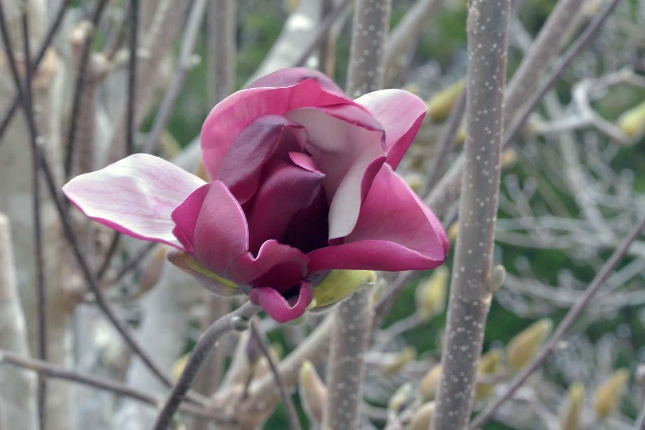 DSC_7792春の庭