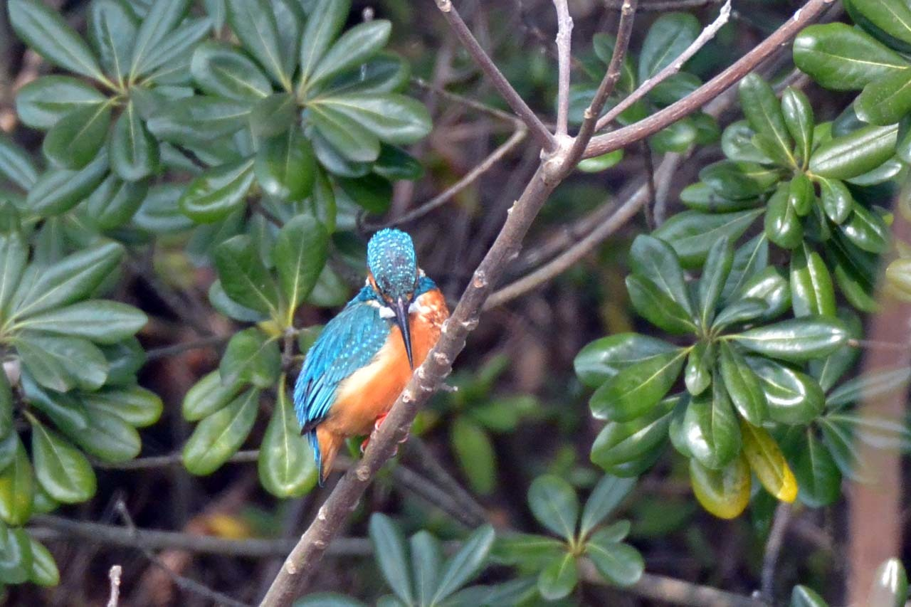 今日鳥DSC_8055
