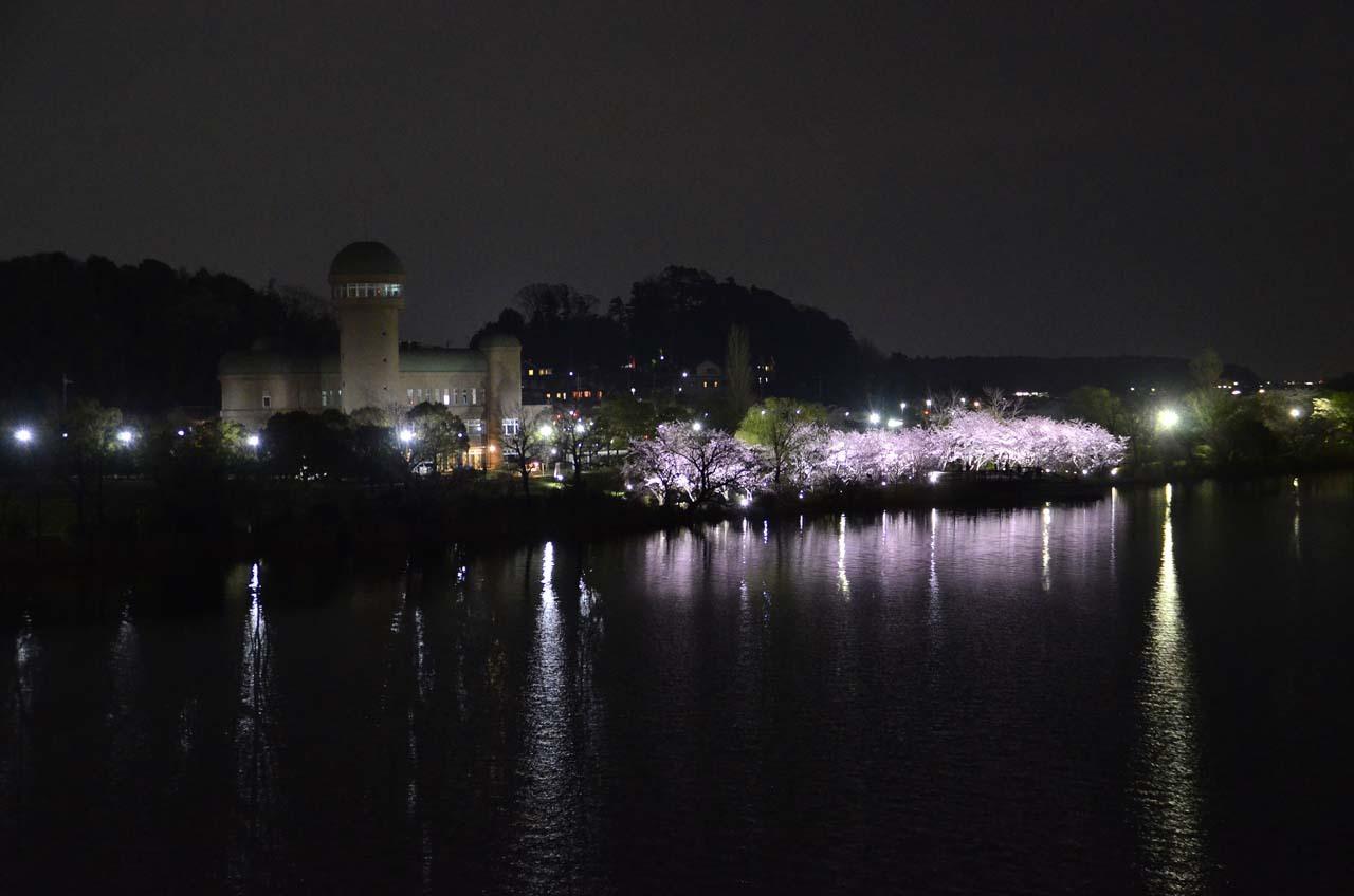_D708379手賀沼の桜