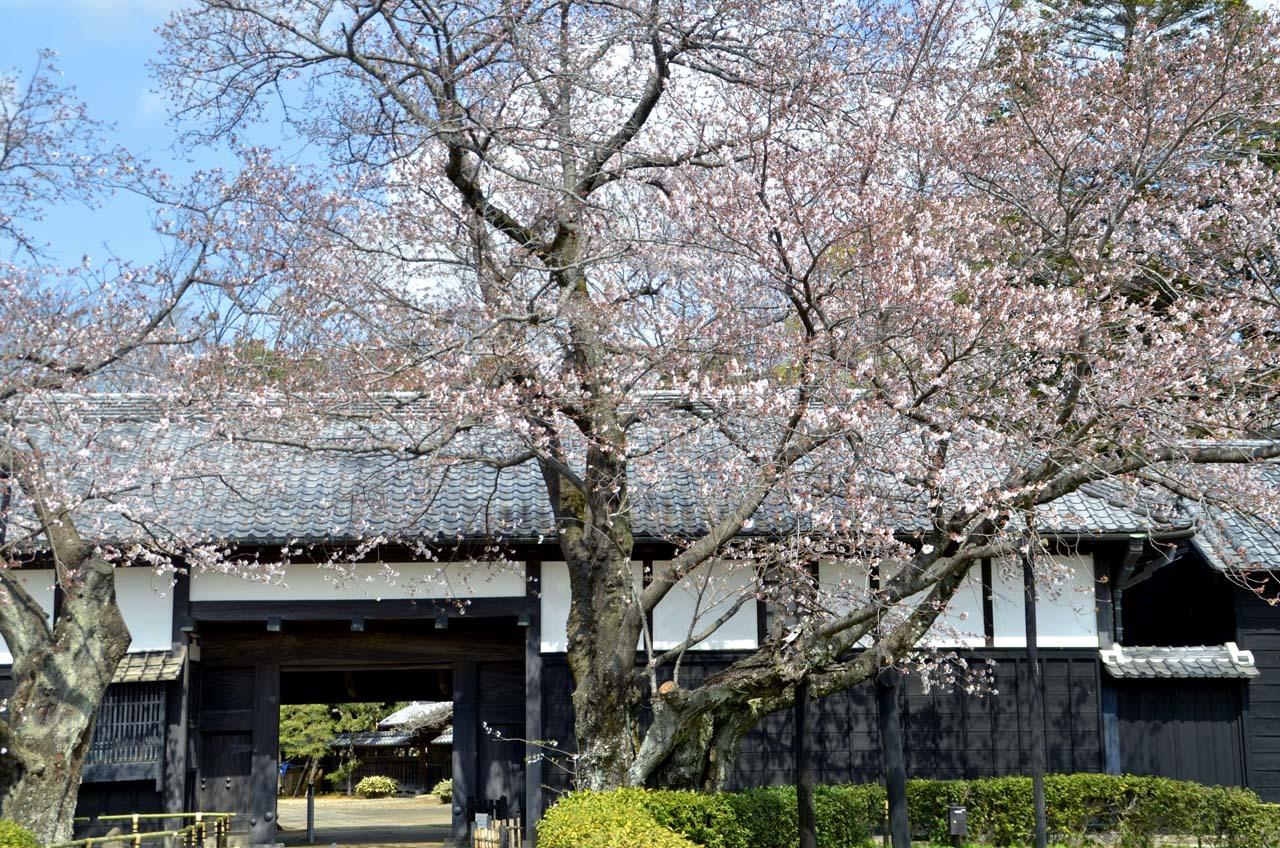 _D708053旧家と桜