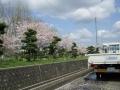 4月*お花見