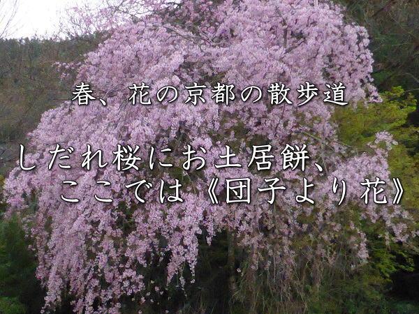 桜 タイトル