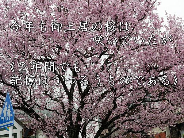 桜(訂正)タイトル画像