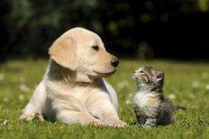 dogcatsheltaerjp.jpg