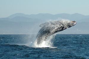 whalingnorway999.jpg