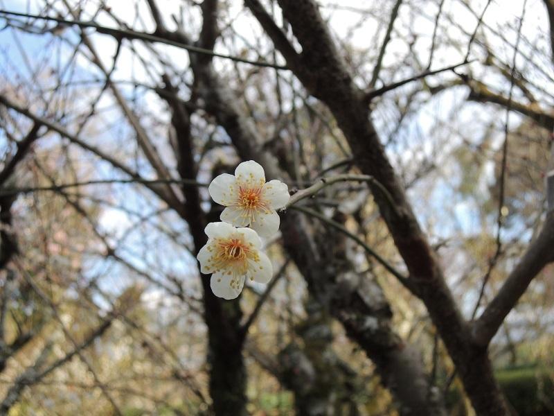 第一梅園「薫の苑」 その5