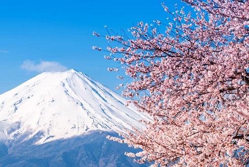 富士山 桜 日本