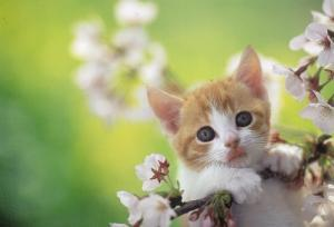 猫with桜2