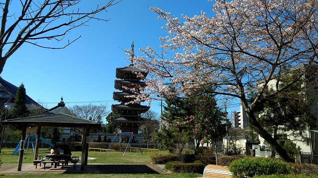 1704sakura011.jpg